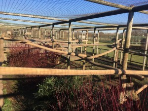 Hardwood Robinia Timber Structure - Hogar - The Big Cat Sanctuary Ashford Kent Hardwood - Robinia Playground Equipment Manufacturer West Sussex Surrey Kent