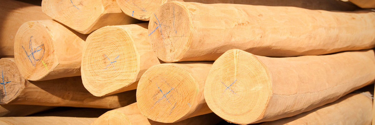 FSC ® Certified Robinia Timber Poles